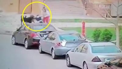 Une femme utilise son corps pour protéger un enfant qui se fait attaquer par des chiens