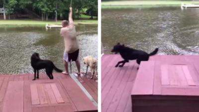 Un chien panique en voyant son maître tomber dans l'eau