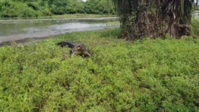Un jeune homme qui pêche se fait pourchasser par un énorme crocodile