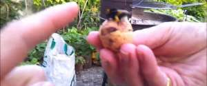 Un bourdon donne une tape dans la main