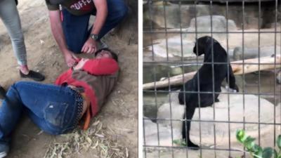 🔞 Une femme se fait lacérer le bras par un jaguar dans un zoo