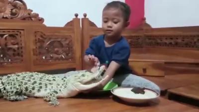 Une enfant joue avec un crocodile et la tête d'un poulet dans son salon