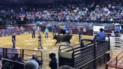 Un taureau éjecte des personnes à l'aide de ses cornes