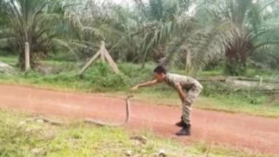Un soldat maîtrise un cobra en utilisant qu'un seul doigt