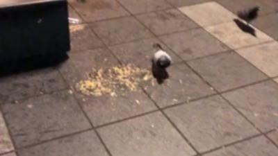 Instant Karma pour un idiot qui tente de shooter un pigeon