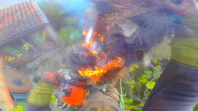 Un bûcheron met le feu à un palmier avec sa tronçonneuse alors qu'il est au sommet