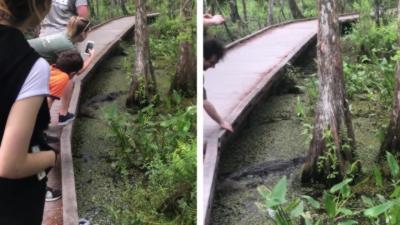 Il tente de prendre une photo d'un alligator mais fait tomber son téléphone dans l'eau