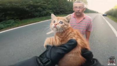 Un motard sauve un petit chaton en plein milieu d'une bretelle d'autoroute