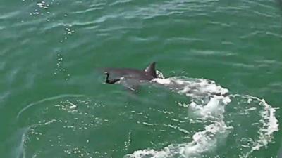 Un oiseau s'échappe miraculeusement de la gueule d'un requin