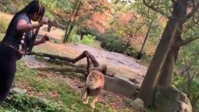 Au zoo, elle rentre dans l'enclos d'un lion pour le narguer