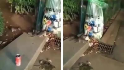 Quel est ce pays où des rats fouillent dans une poubelle ?