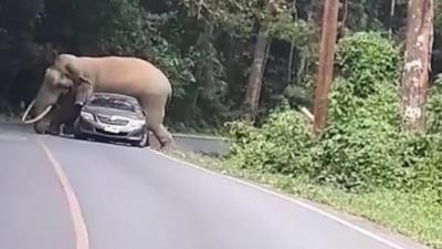 Un éléphant écrase une voiture