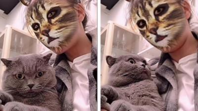 Chats vs filtre chat
