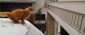 Un chat tente de sauter d'un toit d'une voiture enneigé