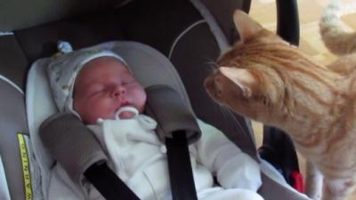 Quand un chat rencontre un bébé pour la toute première fois